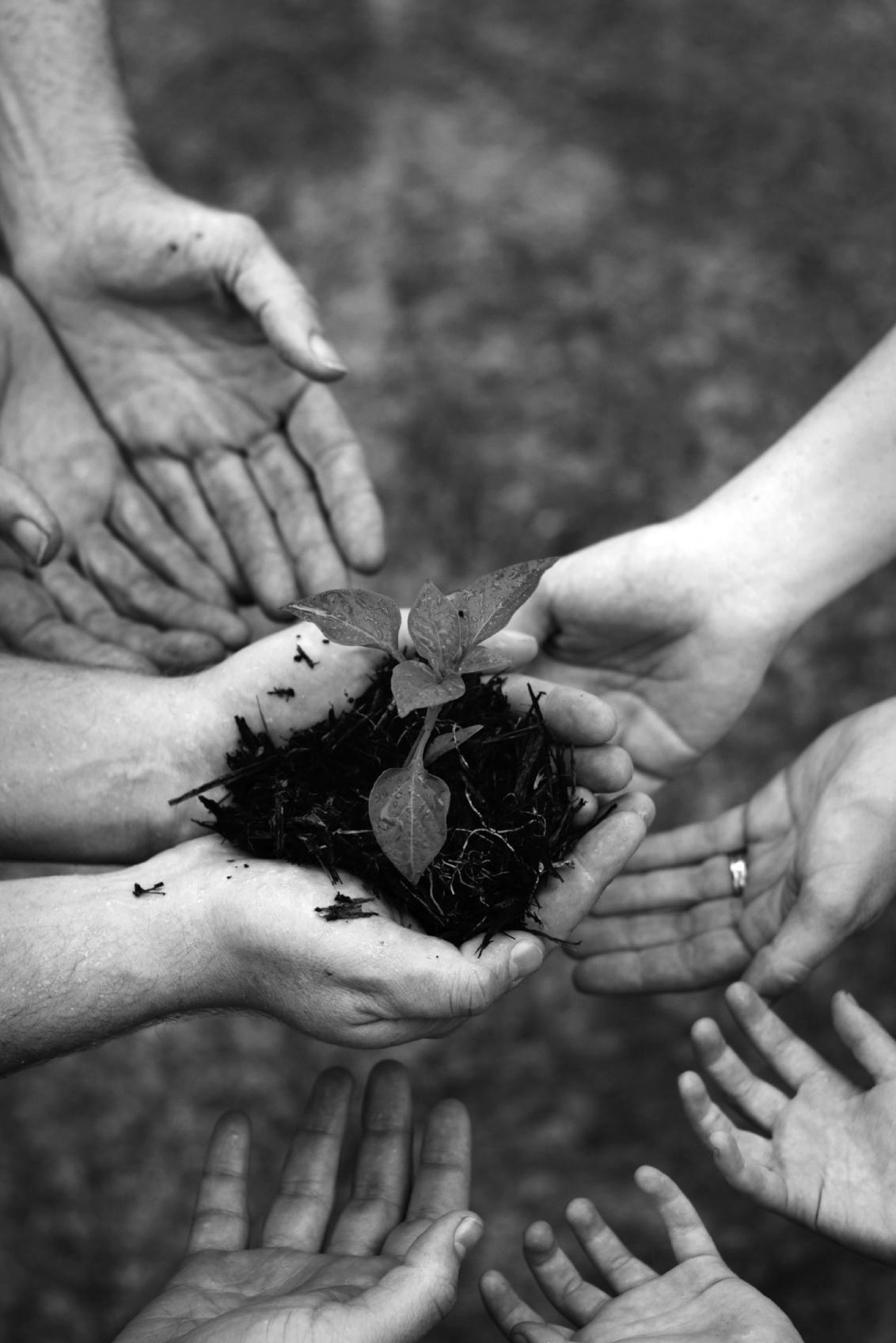 hand that plant